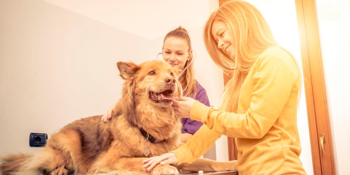 Benefícios no Plano de Saúde Animal